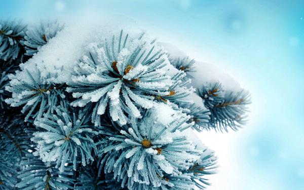Зимові штучки від Google і компанії
