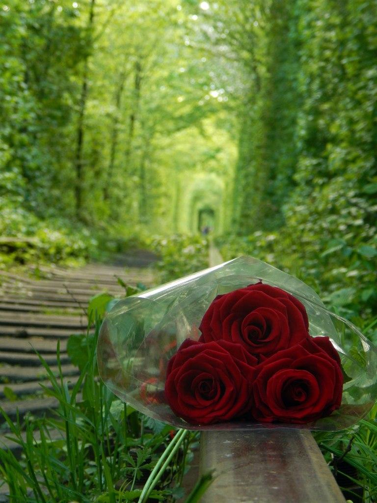 Тунель кохання та червоні троянди
